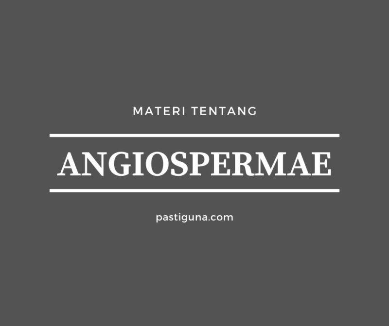Angiospermae